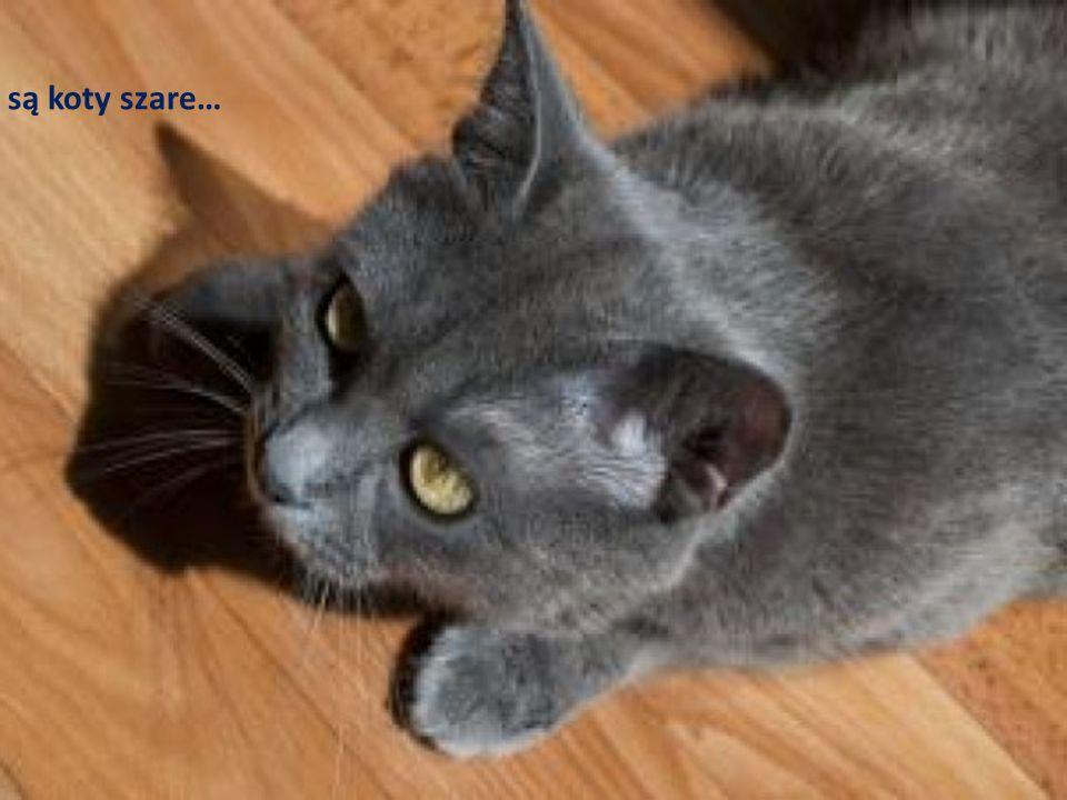… są koty szare…