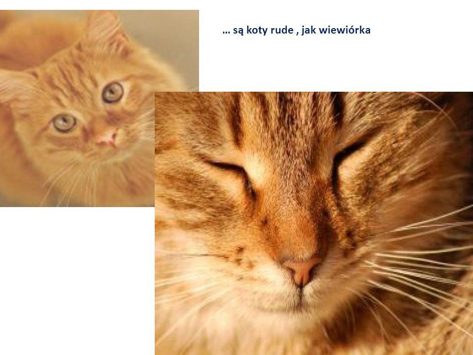 … są koty rude , jak wiewiórka