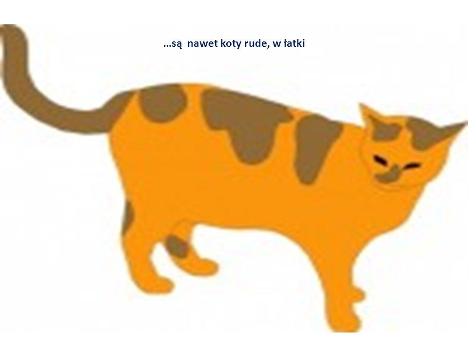 …są nawet koty rude, w łatki
