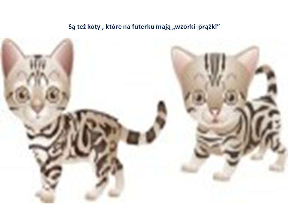 """Są też koty , które na futerku mają """"wzorki- prążki"""