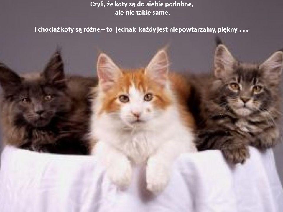 Czyli, że koty są do siebie podobne, ale nie takie same