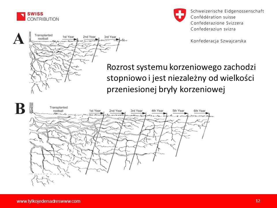 Rozrost systemu korzeniowego zachodzi stopniowo i jest niezależny od wielkości przeniesionej bryły korzeniowej