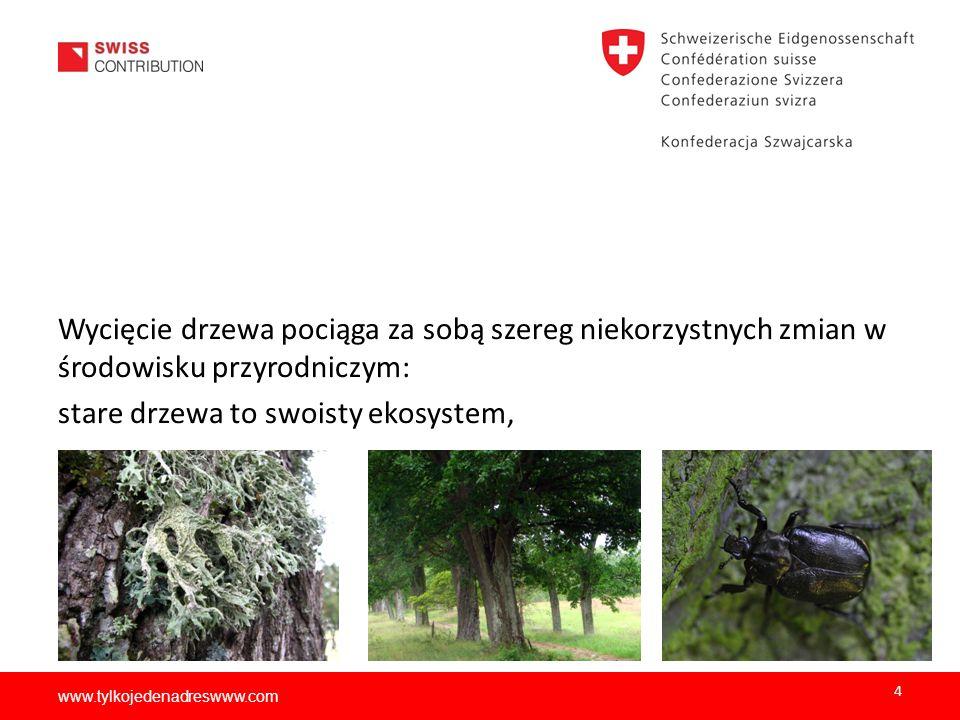 stare drzewa to swoisty ekosystem,