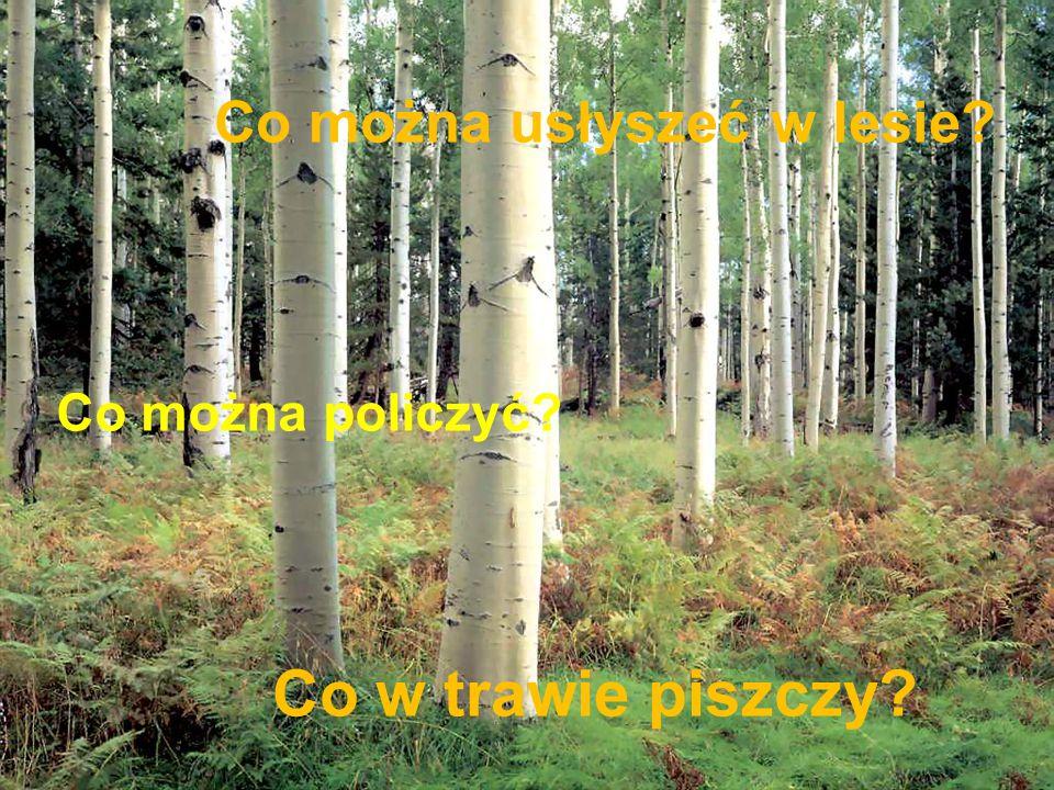 Co można usłyszeć w lesie