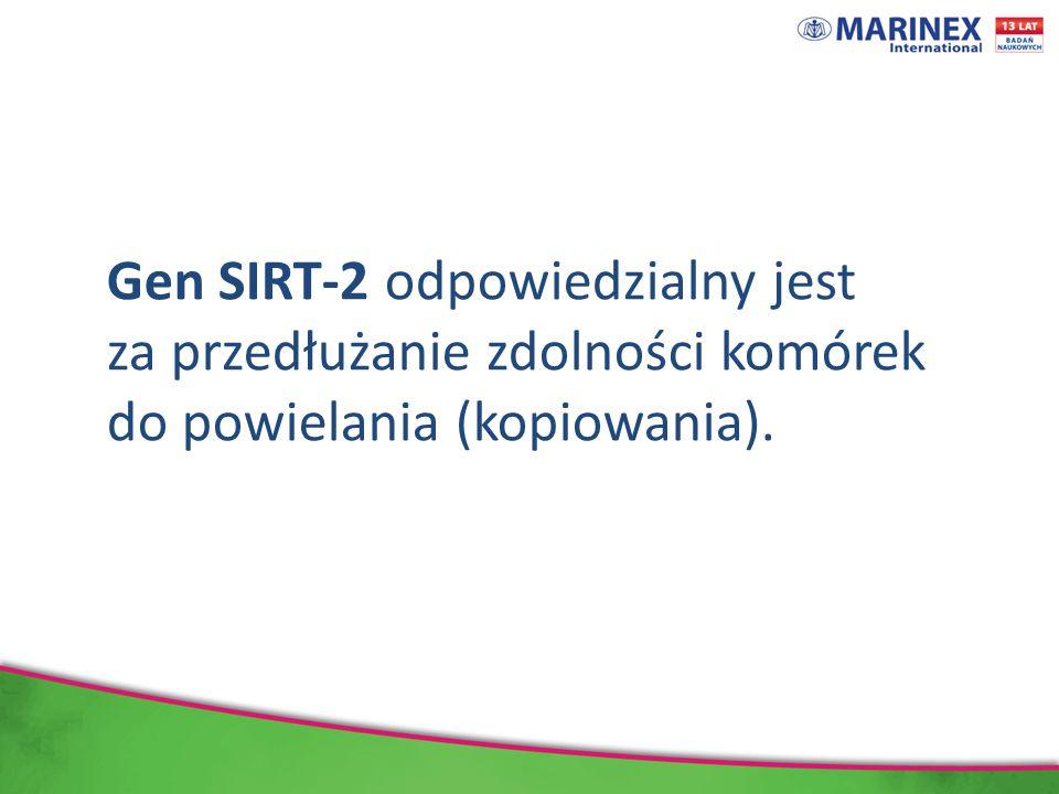 Gen SIRT-2 odpowiedzialny jest