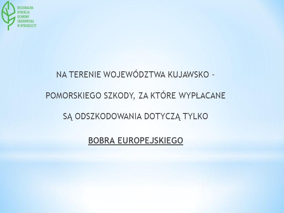 NA TERENIE WOJEWÓDZTWA KUJAWSKO – POMORSKIEGO SZKODY, ZA KTÓRE WYPŁACANE SĄ ODSZKODOWANIA DOTYCZĄ TYLKO BOBRA EUROPEJSKIEGO