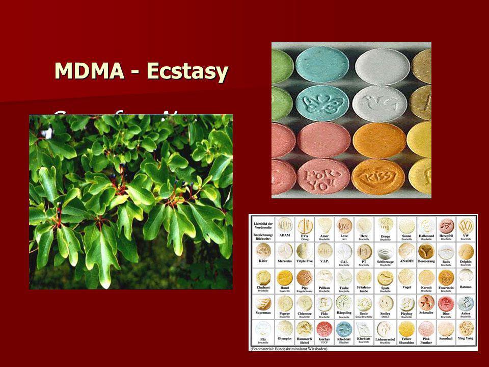 MDMA - Ecstasy Sassafras Nees