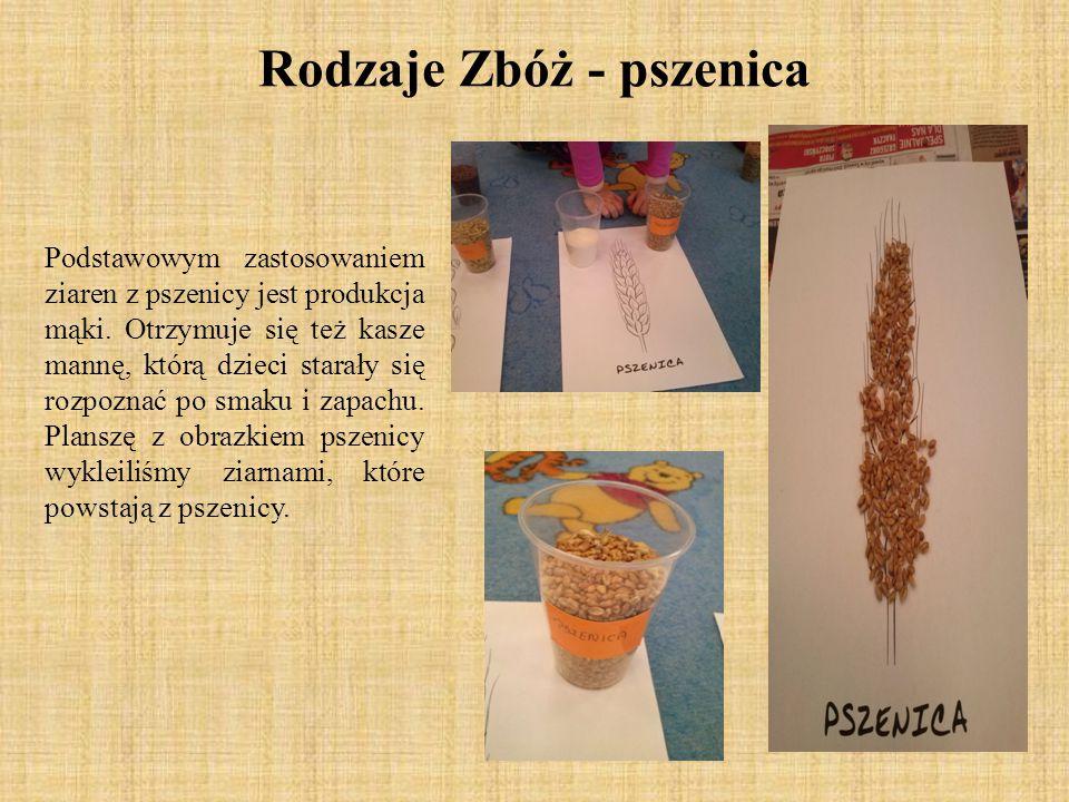 Rodzaje Zbóż - pszenica