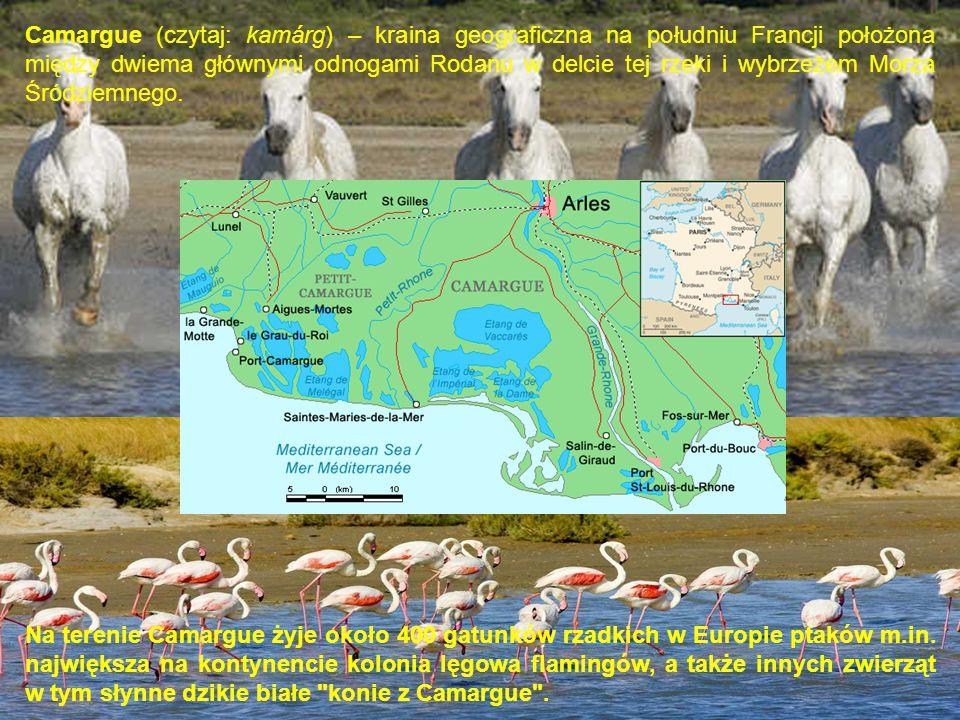 Camargue (czytaj: kamárg) – kraina geograficzna na południu Francji położona między dwiema głównymi odnogami Rodanu w delcie tej rzeki i wybrzeżem Morza Śródziemnego.