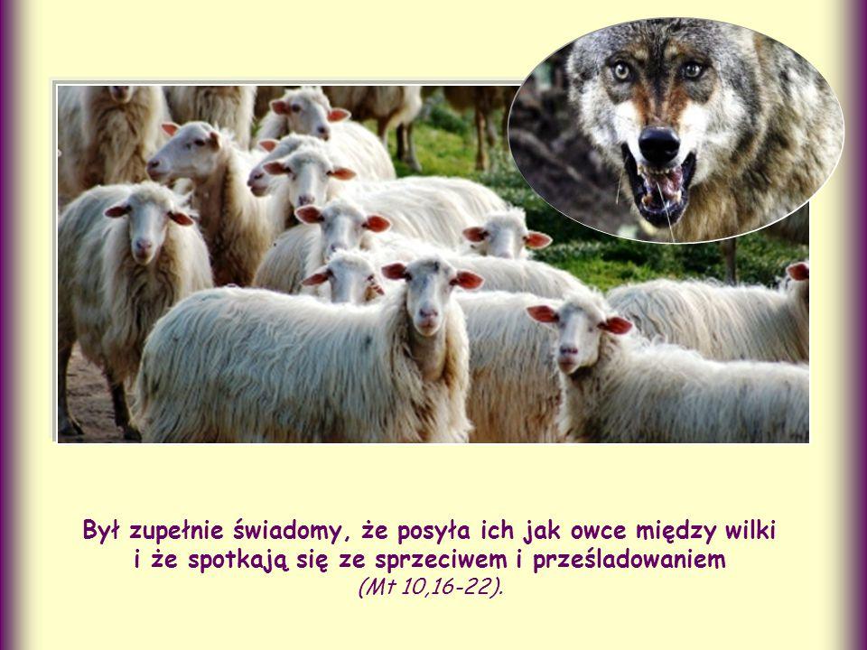 Był zupełnie świadomy, że posyła ich jak owce między wilki i że spotkają się ze sprzeciwem i prześladowaniem (Mt 10,16-22).