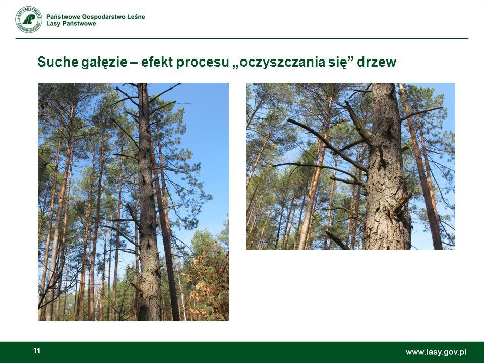 """Suche gałęzie – efekt procesu """"oczyszczania się drzew"""