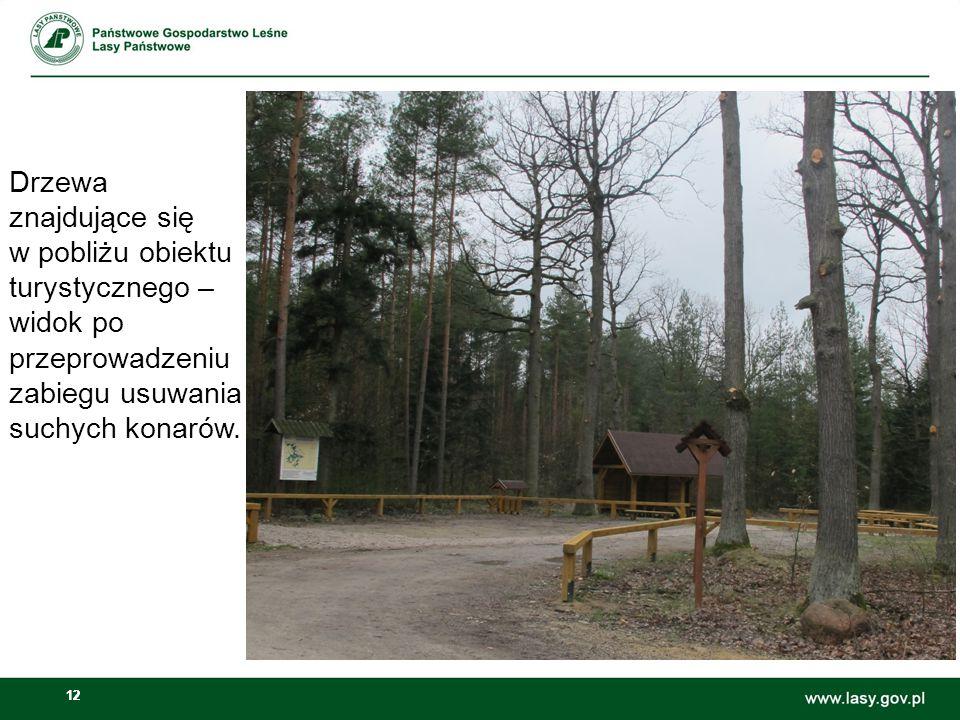 Drzewa znajdujące się w pobliżu obiektu turystycznego – widok po przeprowadzeniu zabiegu usuwania suchych konarów.