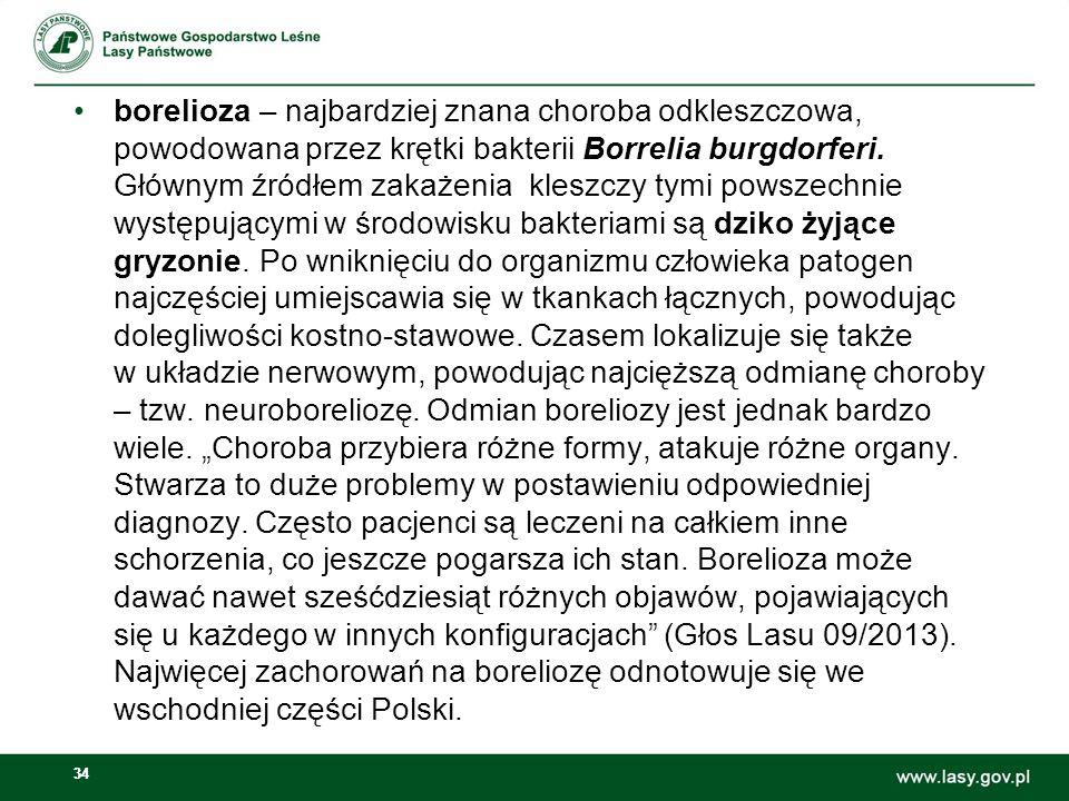 borelioza – najbardziej znana choroba odkleszczowa, powodowana przez krętki bakterii Borrelia burgdorferi.