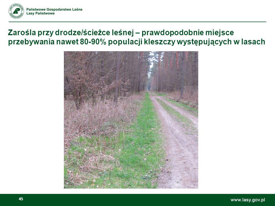 Zarośla przy drodze/ścieżce leśnej – prawdopodobnie miejsce przebywania nawet 80-90% populacji kleszczy występujących w lasach