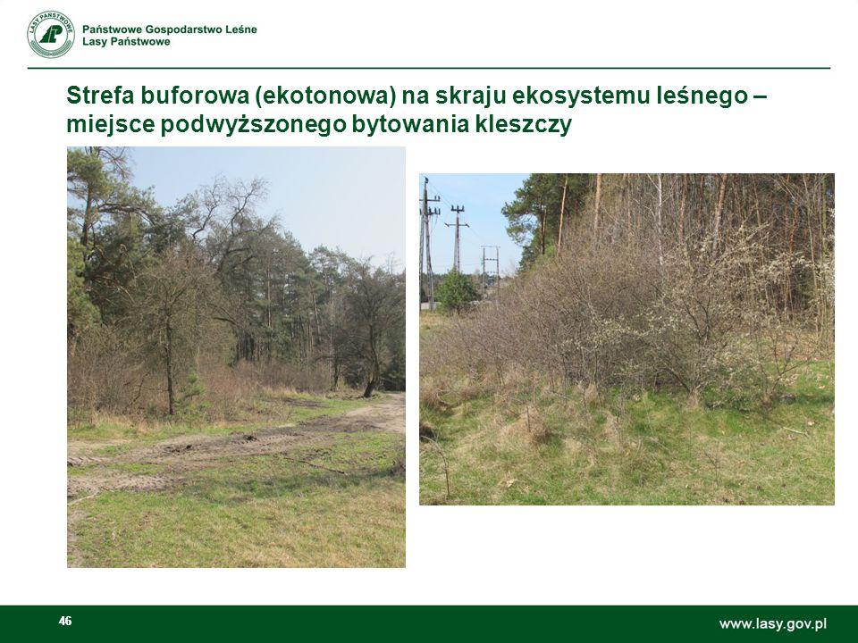 Strefa buforowa (ekotonowa) na skraju ekosystemu leśnego – miejsce podwyższonego bytowania kleszczy