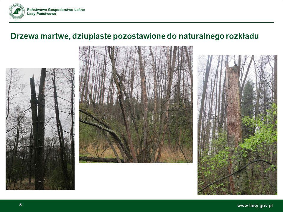 Drzewa martwe, dziuplaste pozostawione do naturalnego rozkładu