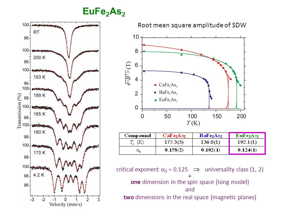 EuFe2As2 Root mean square amplitude of SDW