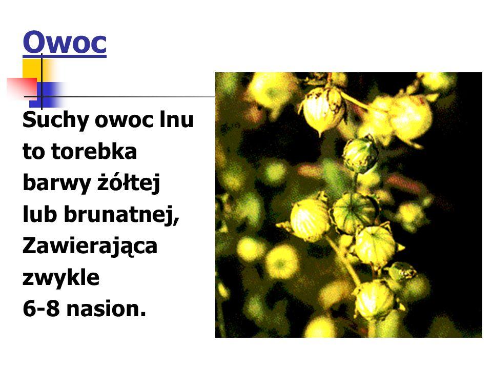 Owoc Suchy owoc lnu to torebka barwy żółtej lub brunatnej, Zawierająca