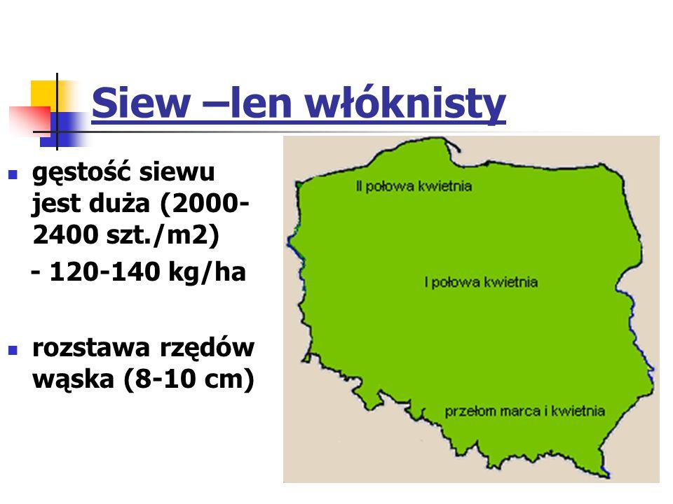 Siew –len włóknisty gęstość siewu jest duża (2000-2400 szt./m2)