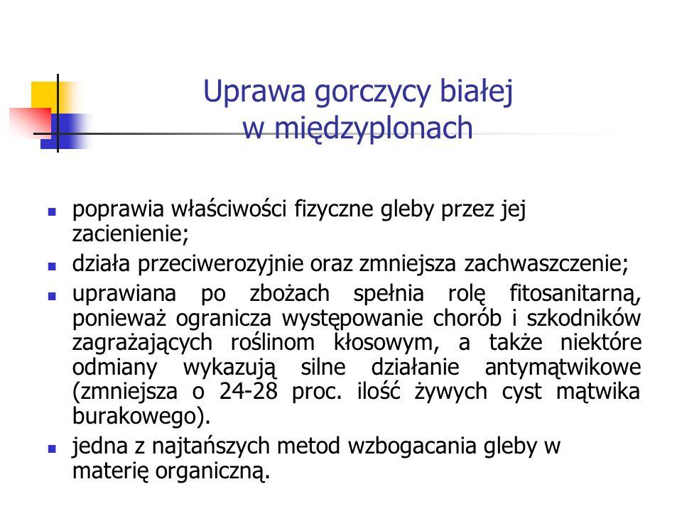 Uprawa gorczycy białej w międzyplonach