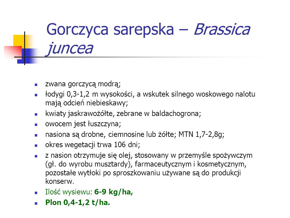 Gorczyca sarepska – Brassica juncea