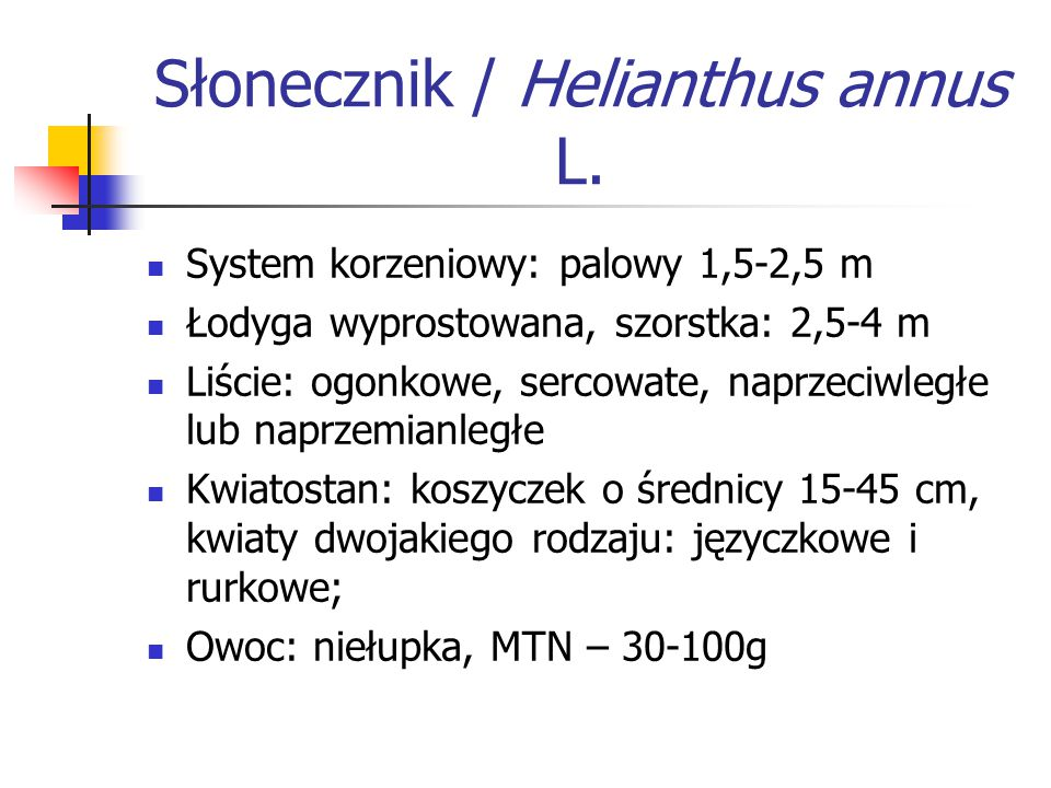 Słonecznik / Helianthus annus L.
