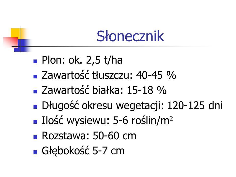 Słonecznik Plon: ok. 2,5 t/ha Zawartość tłuszczu: 40-45 %