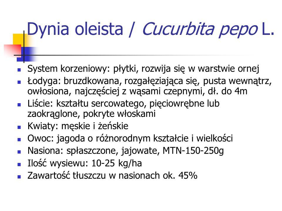 Dynia oleista / Cucurbita pepo L.
