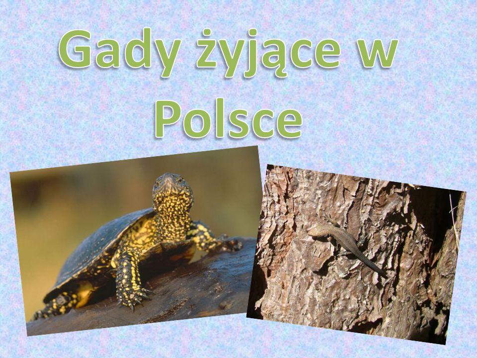 Gady żyjące w Polsce