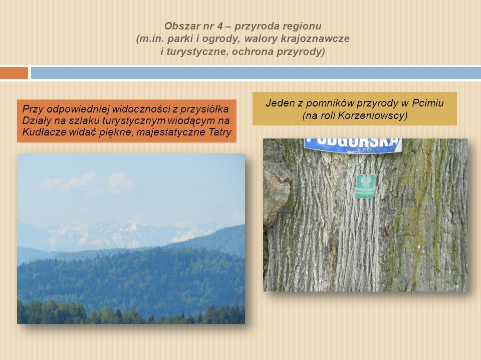 Jeden z pomników przyrody w Pcimiu (na roli Korzeniowscy)