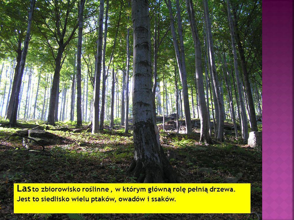 Las to zbiorowisko roślinne , w którym główną rolę pełnią drzewa.