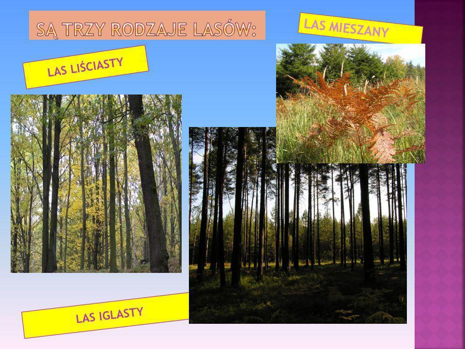 Są trzy rodzaje lasów: LAS MIESZANY LAS LIŚCIASTY LAS IGLASTY