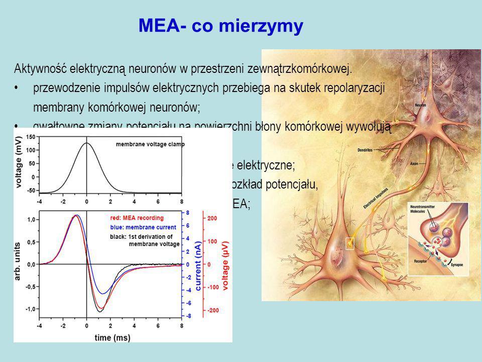 MEA- co mierzymy Aktywność elektryczną neuronów w przestrzeni zewnątrzkomórkowej.