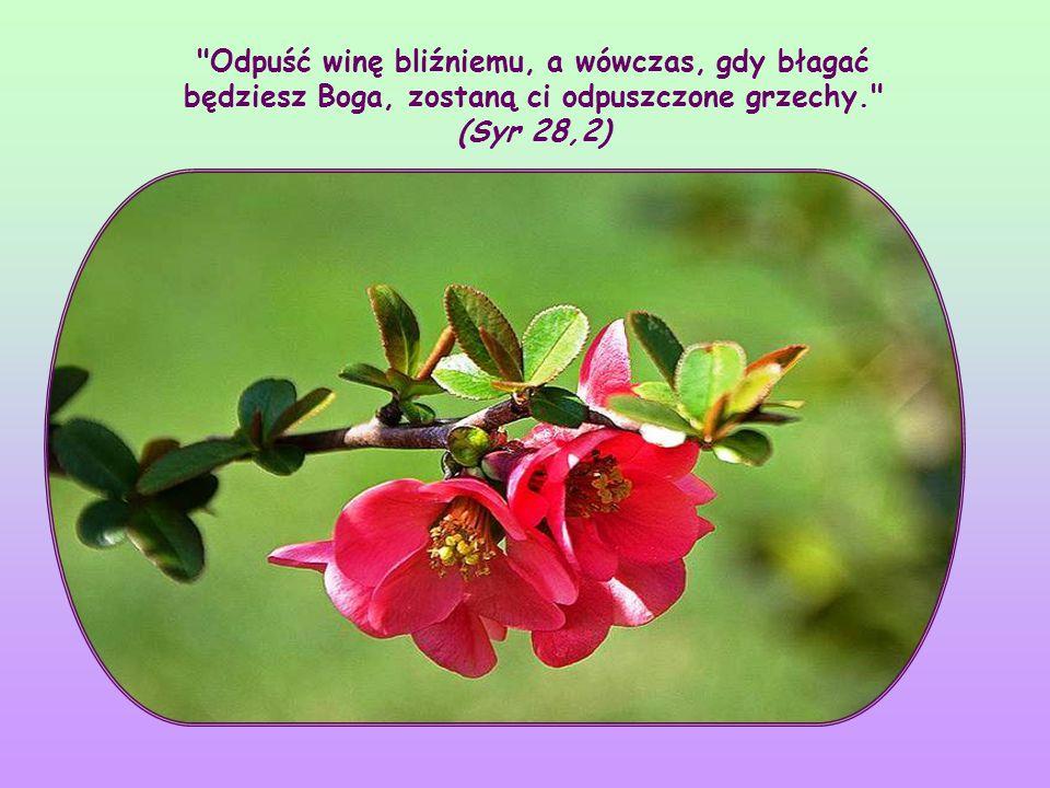 Odpuść winę bliźniemu, a wówczas, gdy błagać będziesz Boga, zostaną ci odpuszczone grzechy. (Syr 28,2)