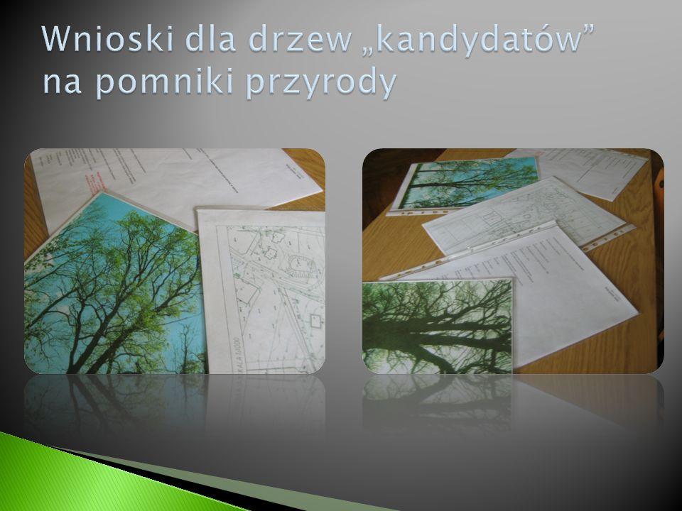 """Wnioski dla drzew """"kandydatów na pomniki przyrody"""