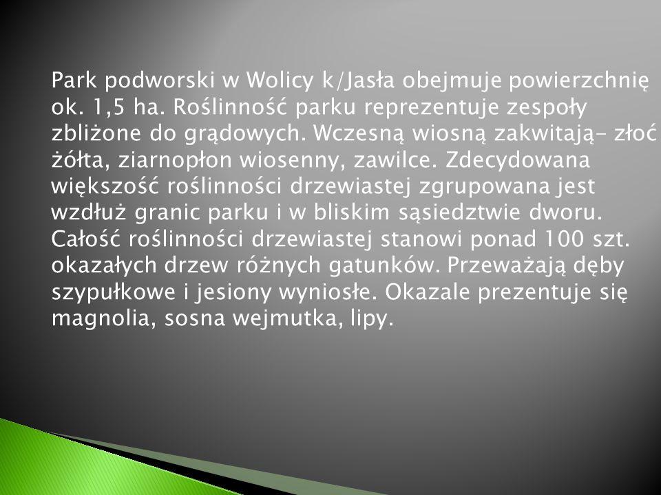 Park podworski w Wolicy k/Jasła obejmuje powierzchnię ok. 1,5 ha