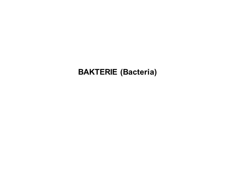 BAKTERIE (Bacteria)