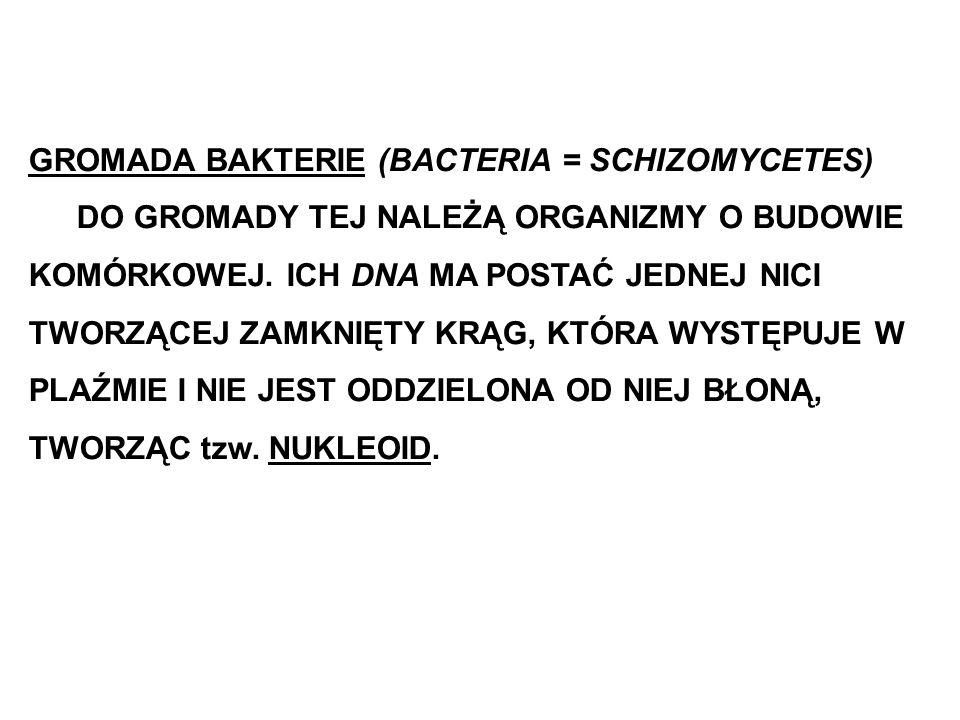 GROMADA BAKTERIE (BACTERIA = SCHIZOMYCETES)