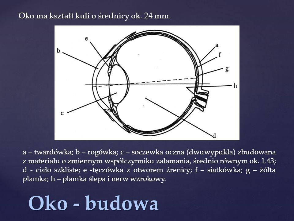 Oko - budowa Oko ma kształt kuli o średnicy ok. 24 mm.