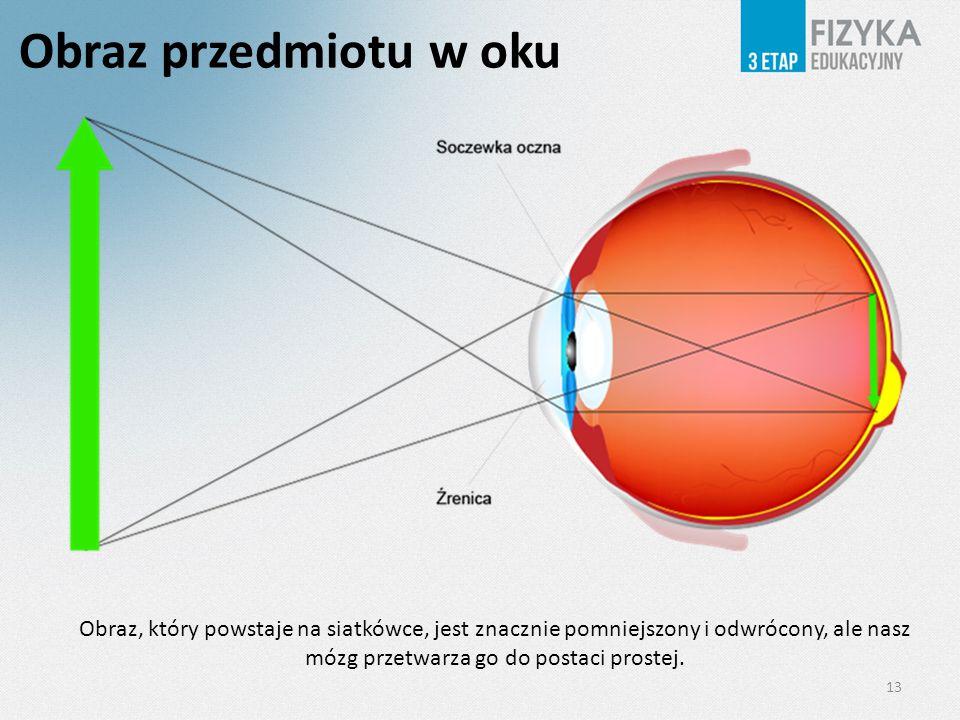 Obraz przedmiotu w oku Obraz, który powstaje na siatkówce, jest znacznie pomniejszony i odwrócony, ale nasz mózg przetwarza go do postaci prostej.