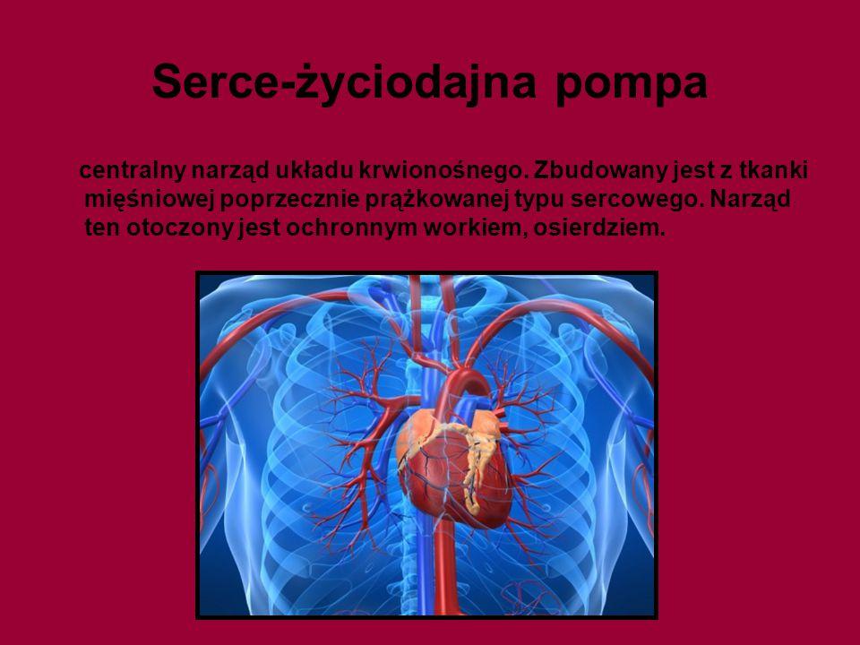 Serce-życiodajna pompa