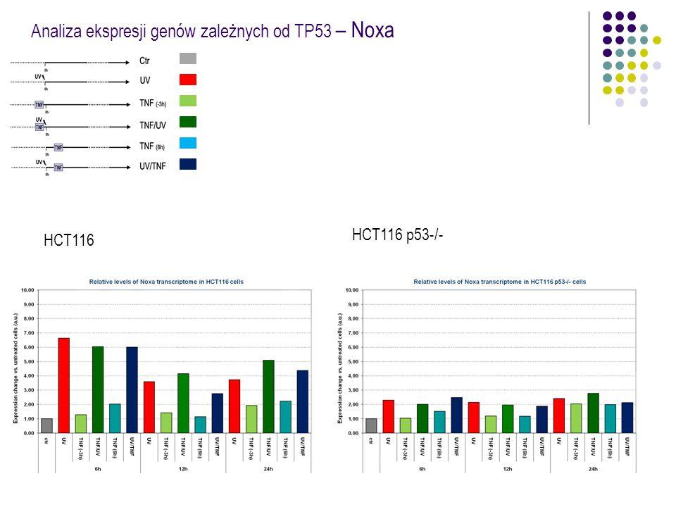Analiza ekspresji genów zależnych od TP53 – Noxa