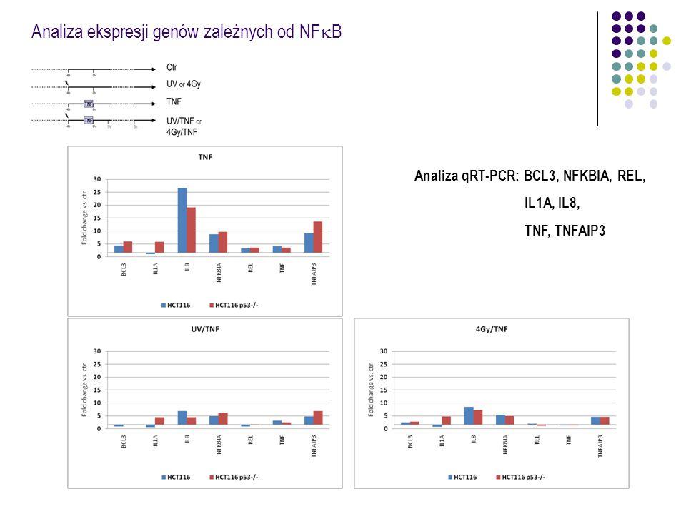 Analiza ekspresji genów zależnych od NFkB
