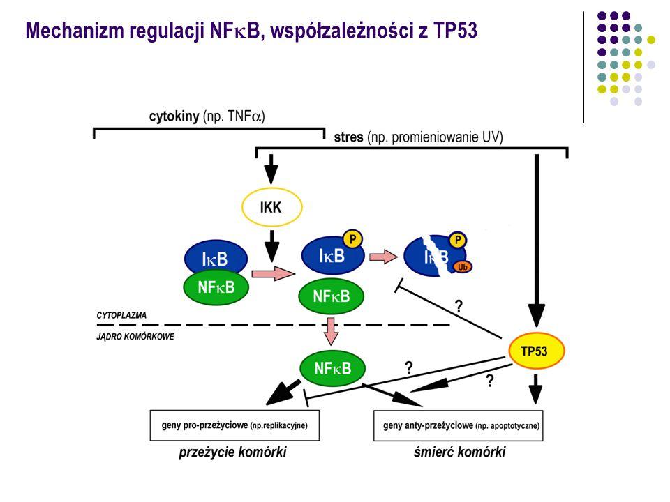 Mechanizm regulacji NFkB, współzależności z TP53