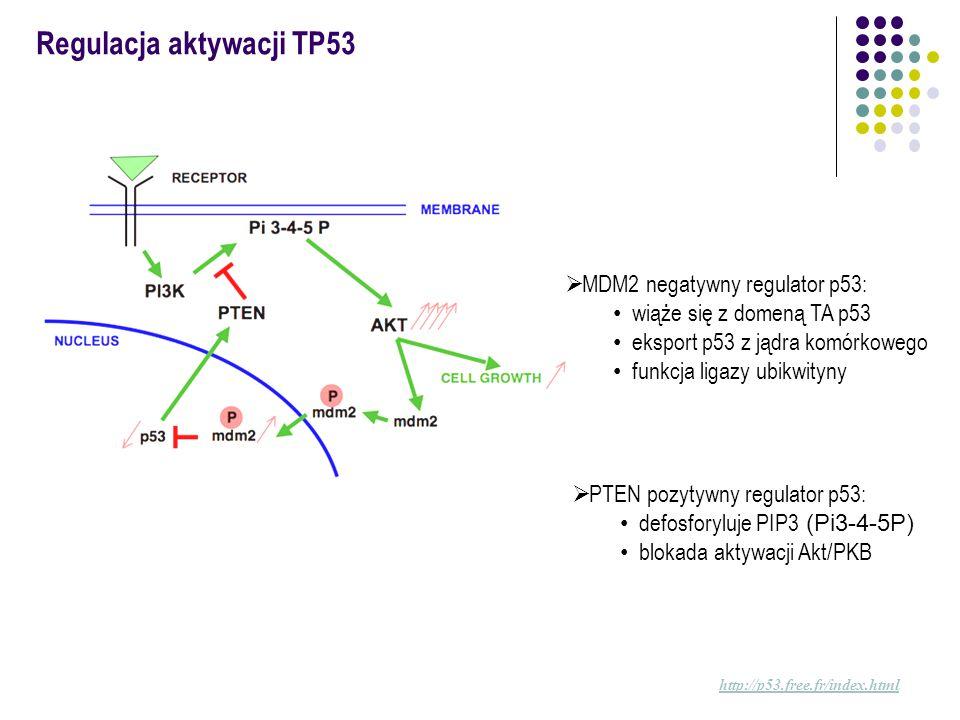 Regulacja aktywacji TP53