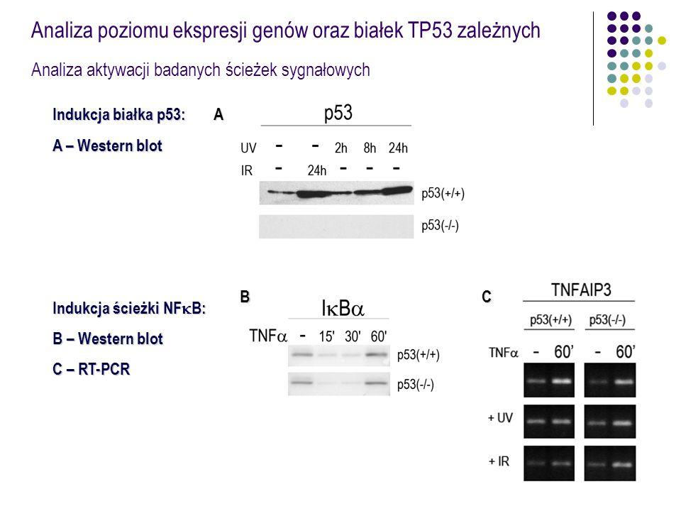 Analiza poziomu ekspresji genów oraz białek TP53 zależnych