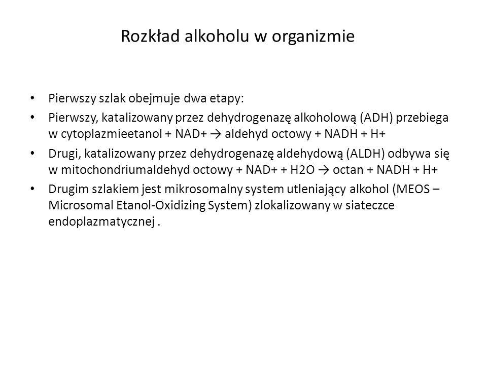 Rozkład alkoholu w organizmie