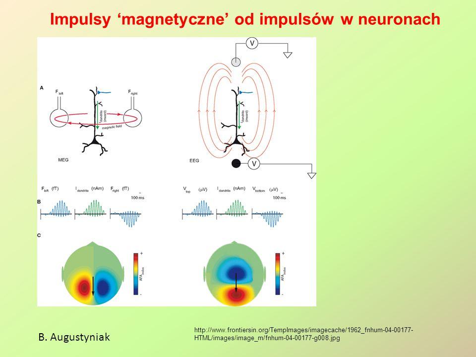 Impulsy 'magnetyczne' od impulsów w neuronach