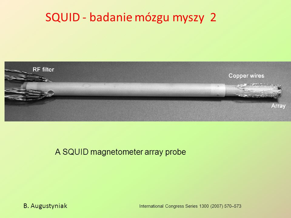 SQUID - badanie mózgu myszy 2