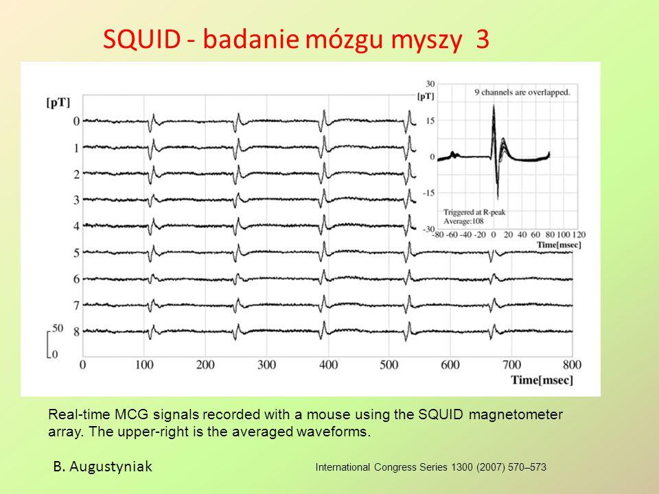 SQUID - badanie mózgu myszy 3
